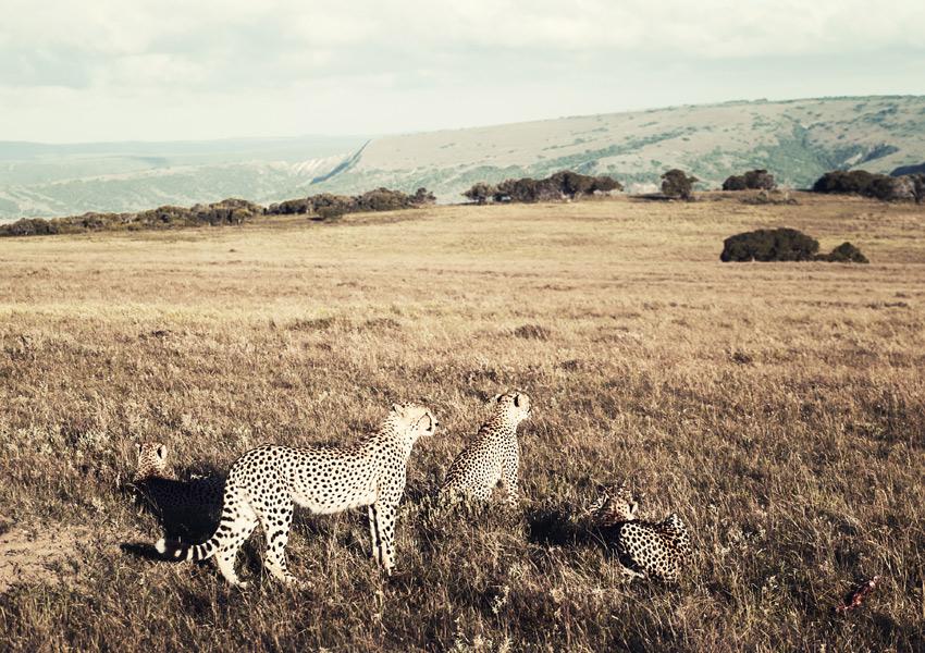 safari_3