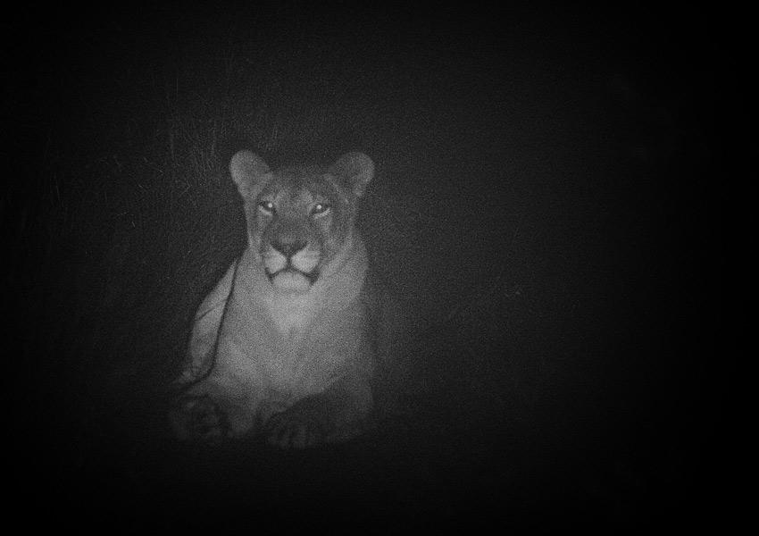 safari_4
